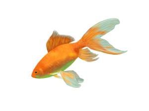 A goldfish - A longer attention span than presentation audiences?